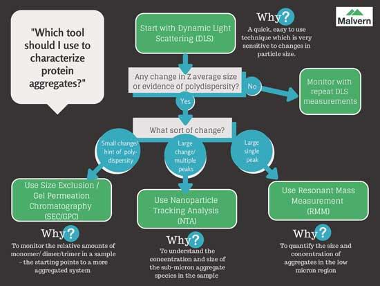 protein aggregate analysis