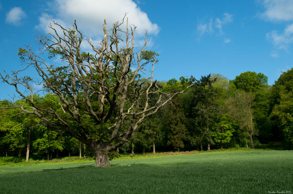 malvern hills tree