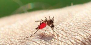 MosquitoSkin
